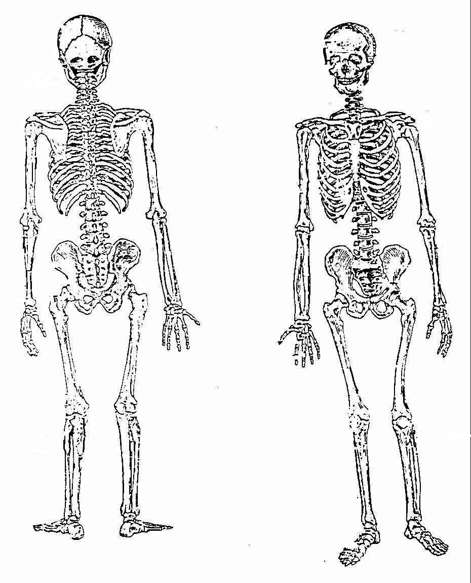Anatomy Skeleton Coloring Pages | Coloring Page